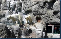 Albq Zoo (21)