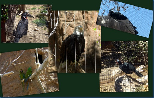 Albq Zoo