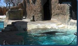 Albq Zoo (6)