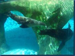 Albq Zoo (7)