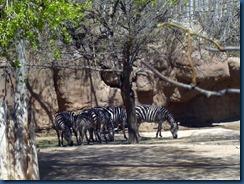Albq Zoo (12)