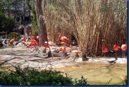 Albq Zoo (2)