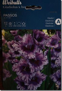 gladiol passos