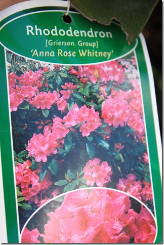 Anna Rose Whitney