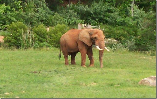 zoo day119- b - elephant