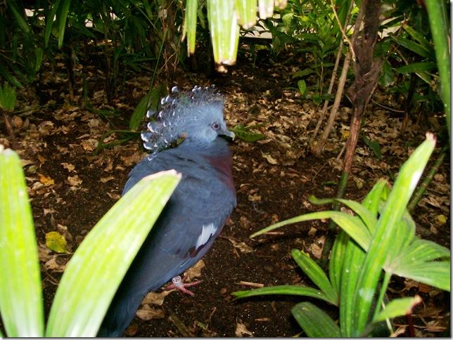 zoo day040 - blue bird -b