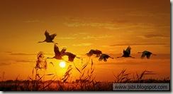 Cranes_ROW2008022745