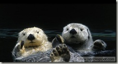 Otters_ROW966687006