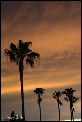 Palms with sunset