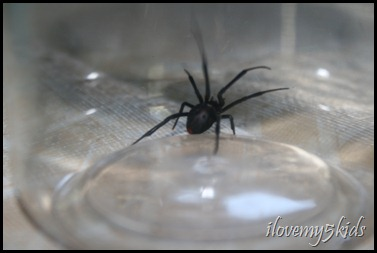 Black Widow captive