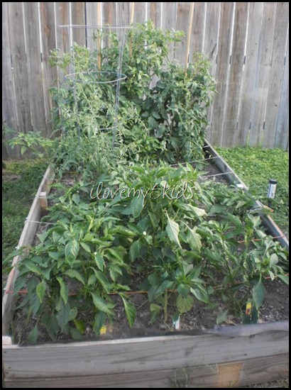 Bell Peppers and Jalapeños