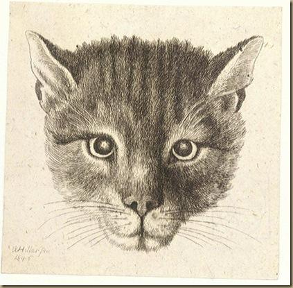Hollar_Cat