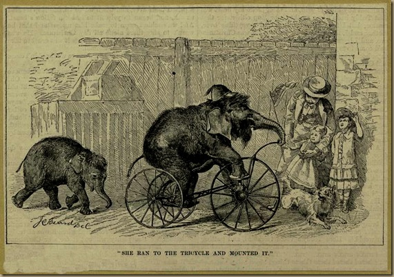elephant_tricycle