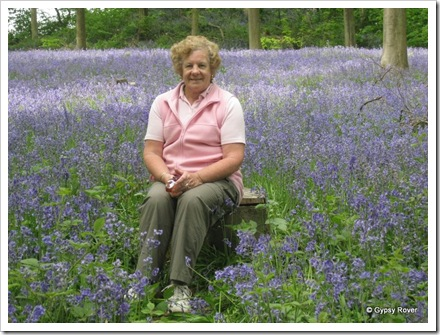 Pixie fairy in Bluebell wood's.