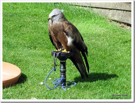 Perriswood Falconry.