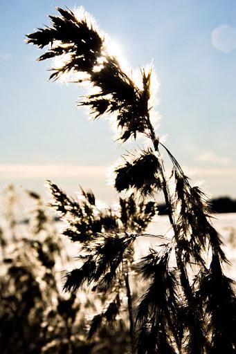 vintervass
