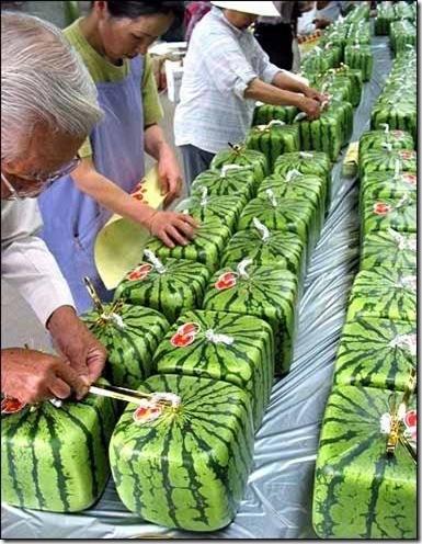 watermelon3