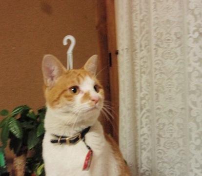 Foto della Settimana / 96 - Il Gatto Appendino