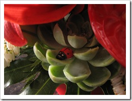 SU flowers 2
