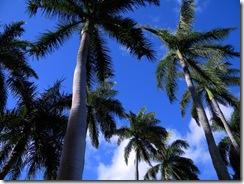 Hawaii 073