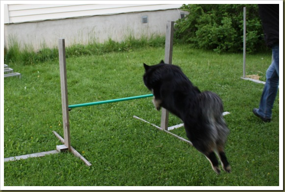 agility-trening 023