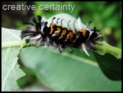 tufted catapiller