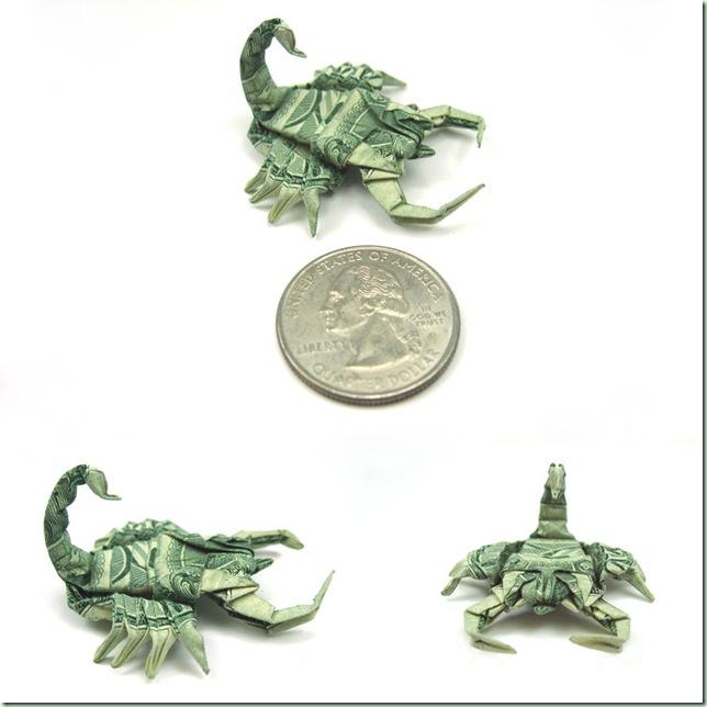 New_pics__Dollar_Scorpion_by_orudorumagi11