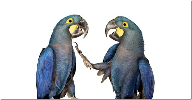 Pássaros-14