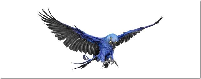 Pássaros-9