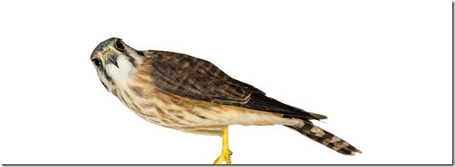 Pássaros-21
