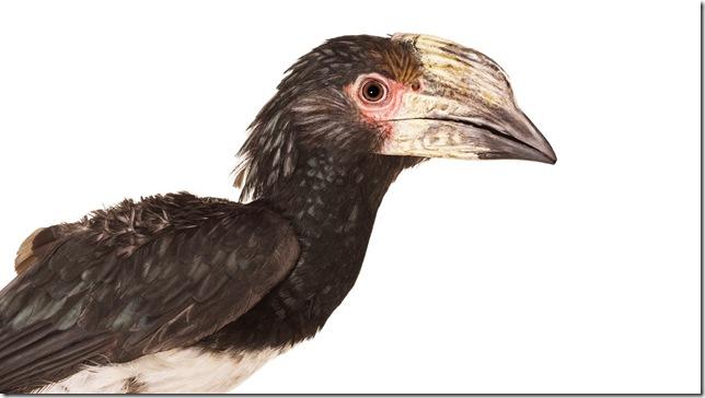 Pássaros-27