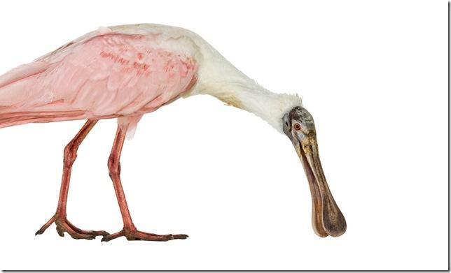 Pássaros-48