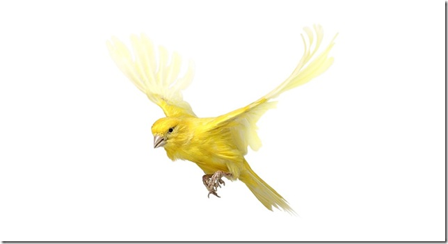 Pássaros-51