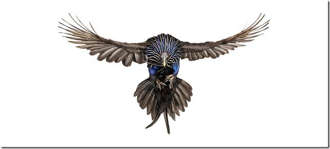 Pássaros-5