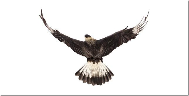 Pássaros-28
