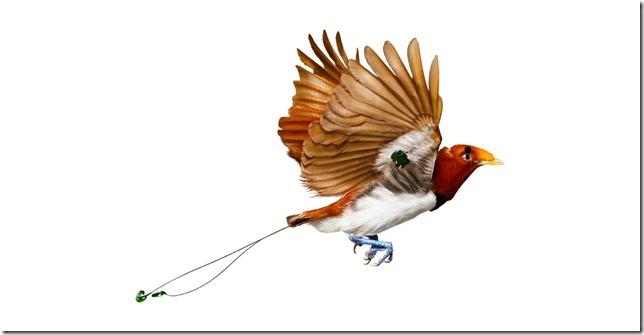 Pássaros-36