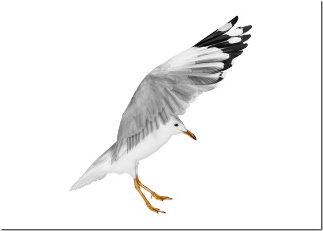 Pássaros-41