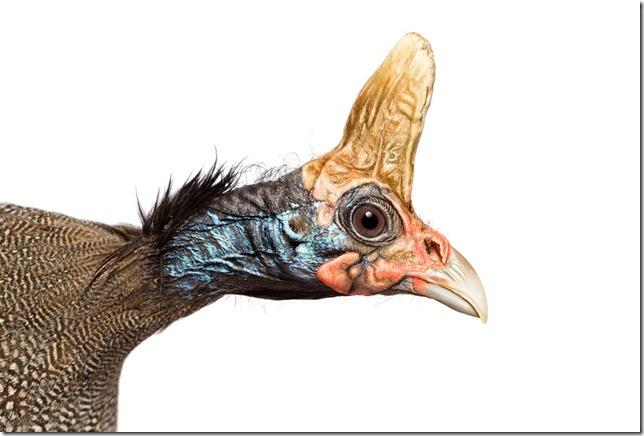 Pássaros-54