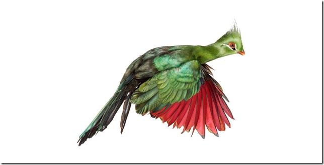 Pássaros-55