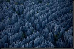 floresta de pedra