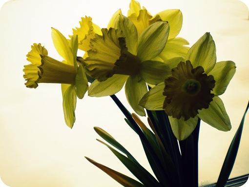 flowers 008-1