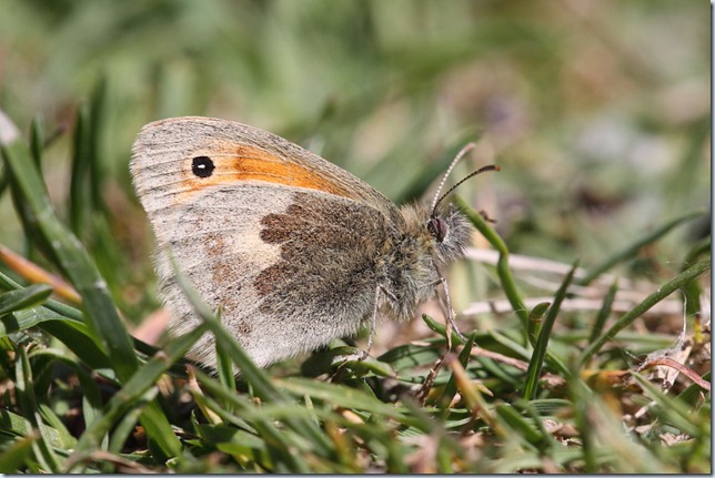 small_heath