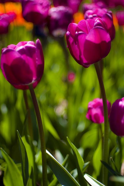 Spring @ Brooklyn Botanic Garden