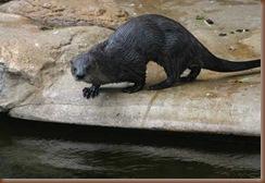 otter resized