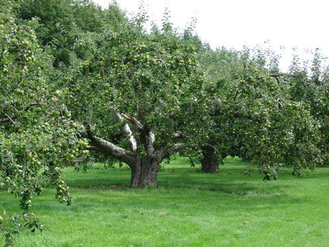 Restoring traditional orchards in gloucestershire welcome for Where can i go apple picking near me