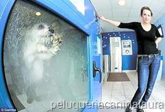 lavadora de perros