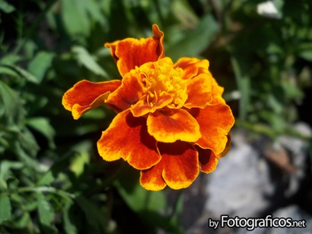 foto-macro-flores