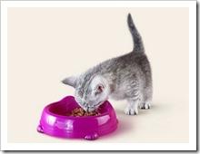 Сложности питания, или почему котёнок не ест