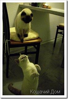 О кошачьих колбасках и цирковых способностях
