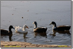 Groby Pool D50  09-01-2011 13-15-27